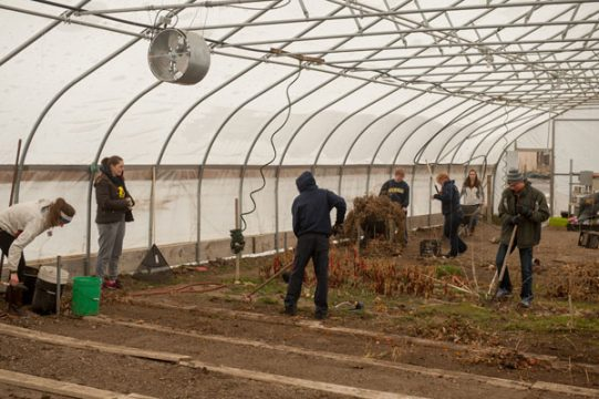 UM-Flint clean a hoop house at an urban farm in Flint.