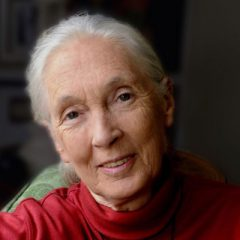 Renowned ethologist and conservationist Dr. Jane Goodall | October 2nd