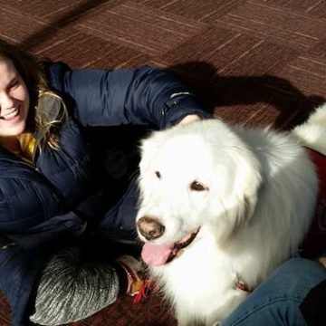 Therapy dogs at the UM-Flint library