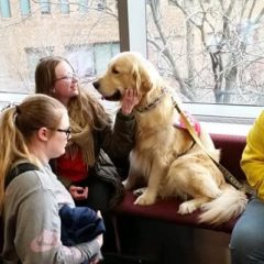 golden retriever at the dog therapy for finals event