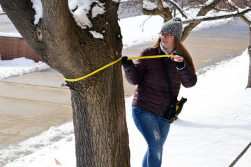 Nicole BlankerNicole Blankertz, senior Wildlife Biology major, measures the diameter of a tree on the UM-Flint campus. tz measuring a tree